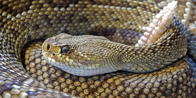 CA Fish and Wildlife advises hikers to be on the watch for rattlesnakes as temperatures rise
